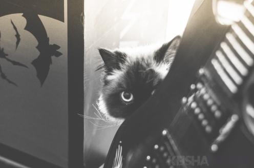 Mr. Originals & Yoda The Cat